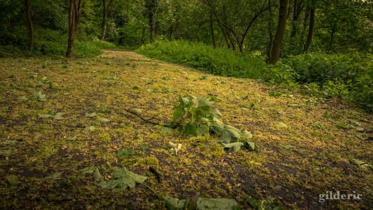 Des feuilles et des fleurs jaunes sur le sentier (de la Chartreuse)