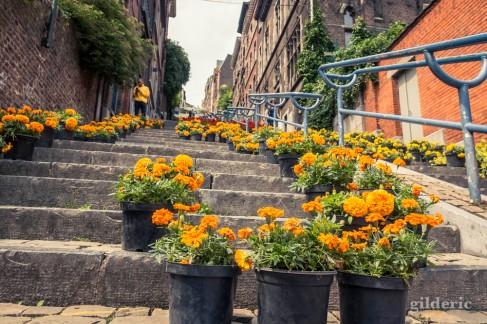 Bueren en fleurs 2018 (à Liège, Belgique)