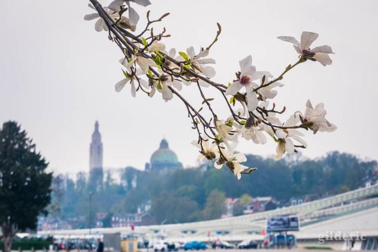 Comment photographier la ville : fleurs par temps gris ?