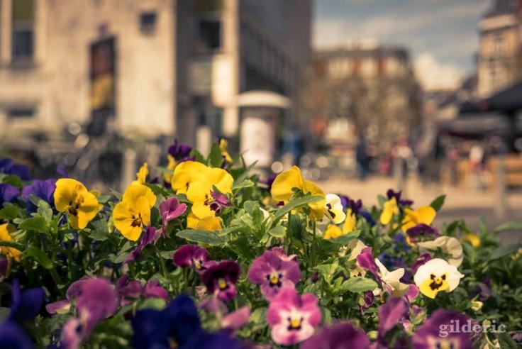 Comment photographier la ville : gros plan sur les fleurs (à Liège)