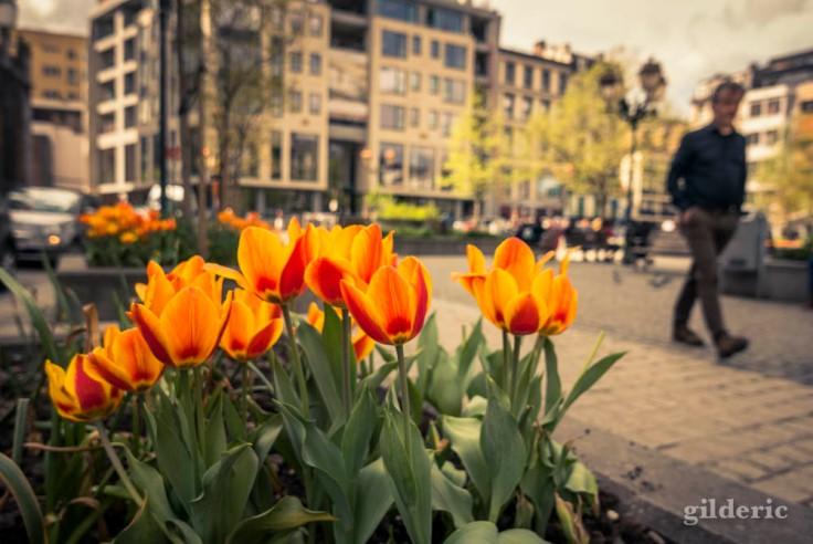 Comment photographier la ville : gros plan sur les fleurs
