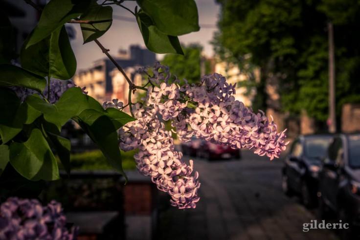 Comment photographier la ville ?
