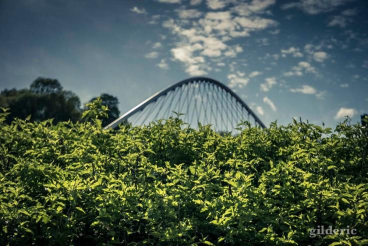 photographier la ville : graphisme végétal
