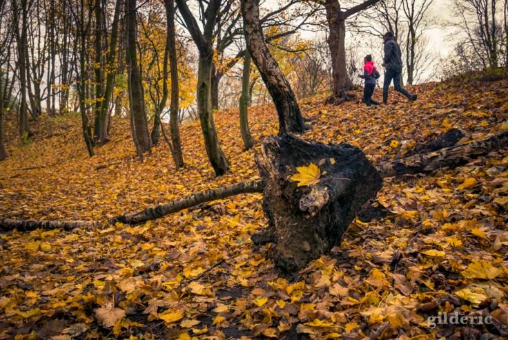 Jogging dans la grisaille en automne (La Chartreuse, Liège)