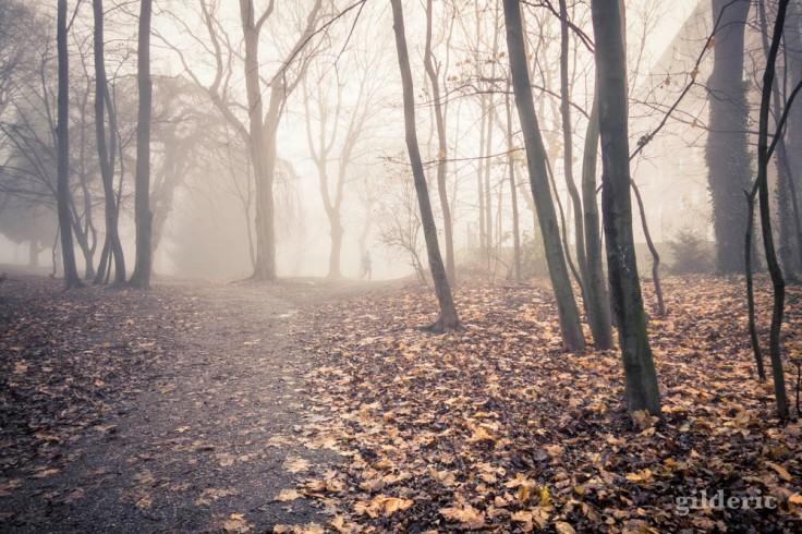 Jogging dans la brume (dans les bois de la Chartreuse)