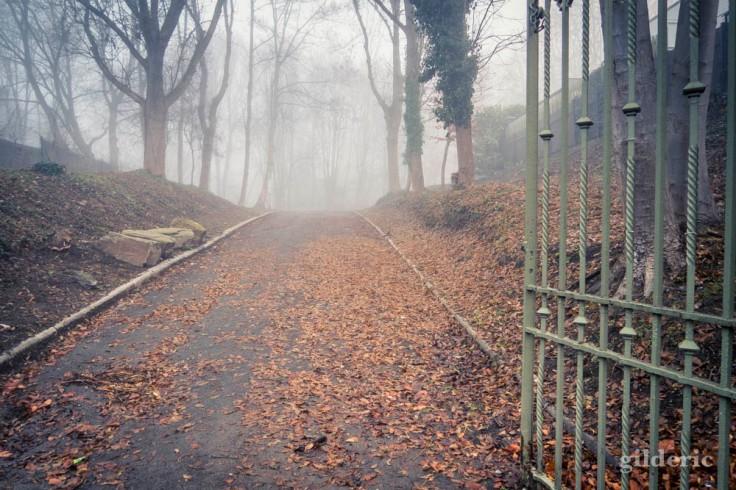 Brouillard d'automne à la Chartreuse (Liège)