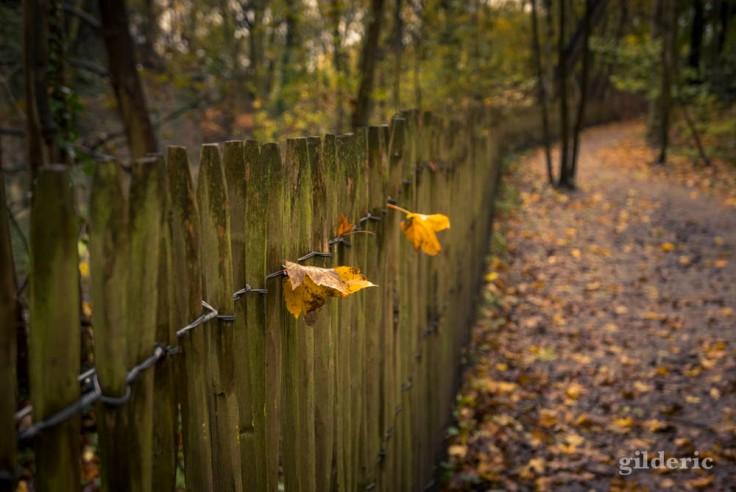 Les dernières feuilles (automne à la Chartreuse, Liège)