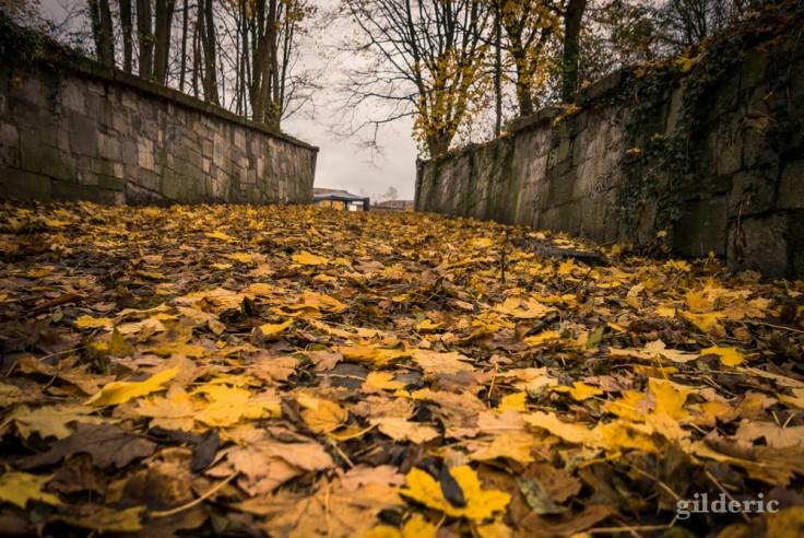 Tapis de feuille en automne (la Chartreuse, Liège)
