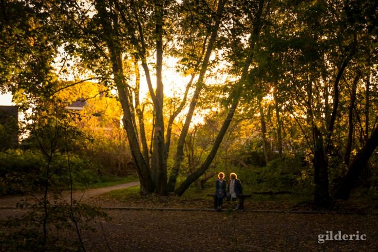 Casques d'or (en automne), bois de la Chartreuse, Liège