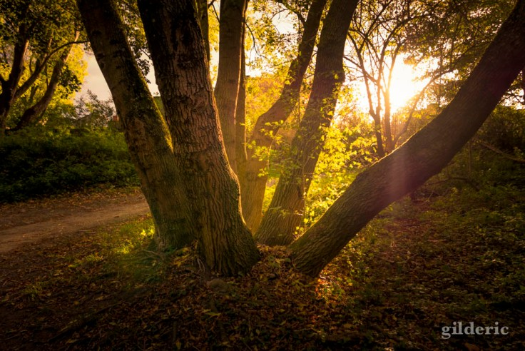 Fin de journée d'automne (bois de la Chartreuse, Liège)