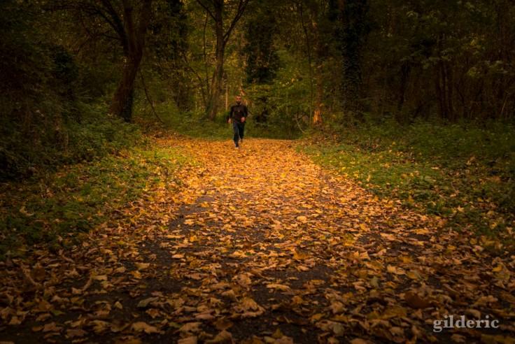 Prendre l'air en automne (la Chartreuse, Liège)