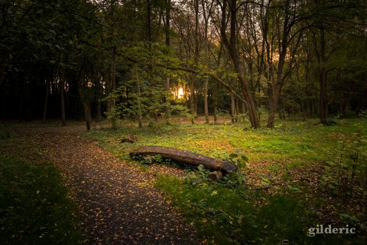 Lumière magique dans la clairière (bois de la Chartreuse, Liège)