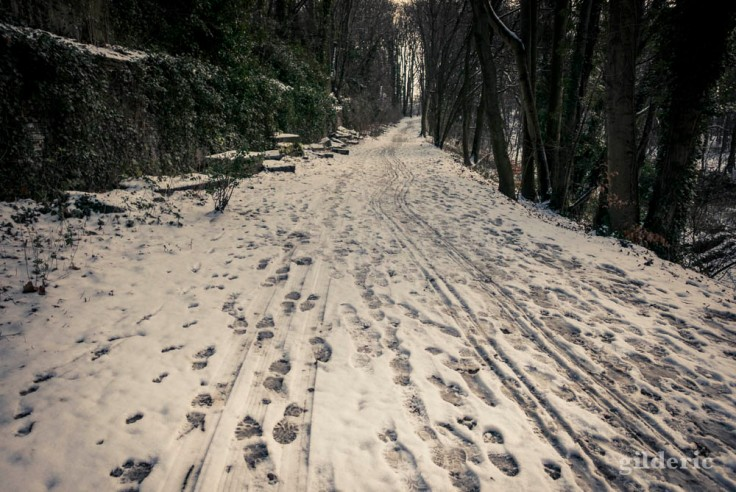 Dimanche neigeux au Parc de la Chartreuse (Liège)