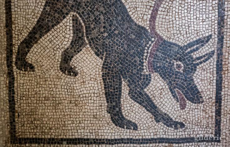 Mosaïque Cave Canem (au Musée archéologique de Naples)