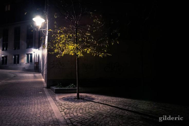 L'arbre et le lampadaire (Liège, Belgique)