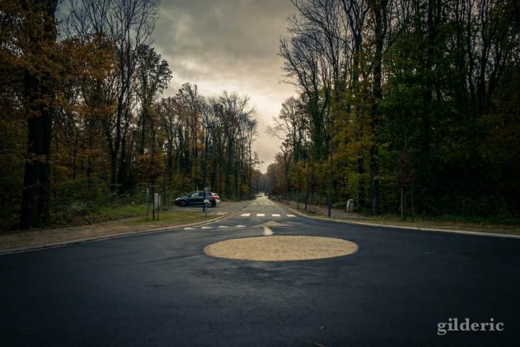 Route déserte dans les bois du Sart Tilman