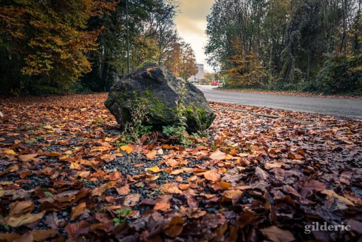 Rocher en automne, au Sart Tilman
