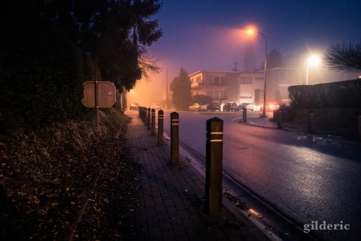 Lumières et mystère (un matin brumeux au Sart-Tilman)