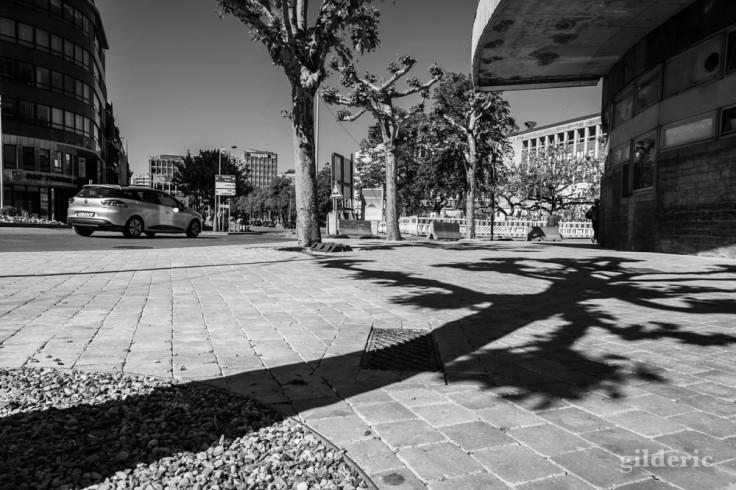 A l'ombre des arbres : chroniques du confinement en noir et blanc