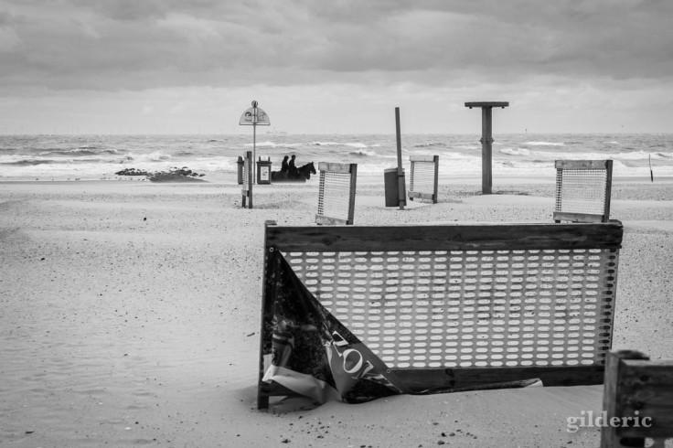 Tempête à Blankenberge : des chevaux sur la plage