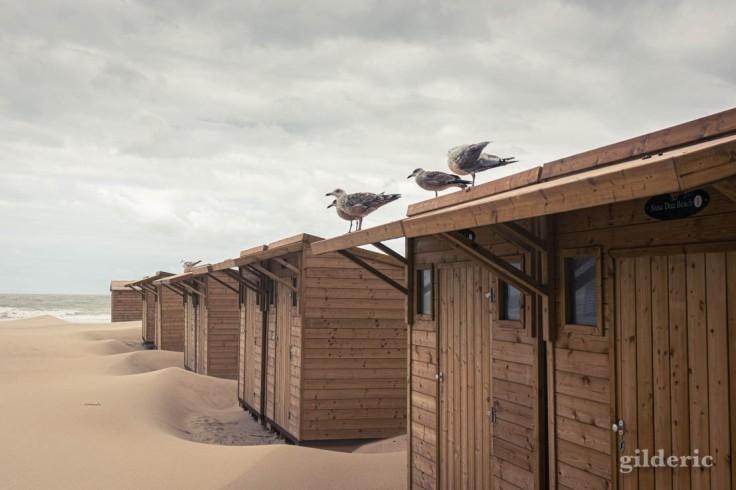 Tempête à Blankenberge : mouettes sur la cabine de plage