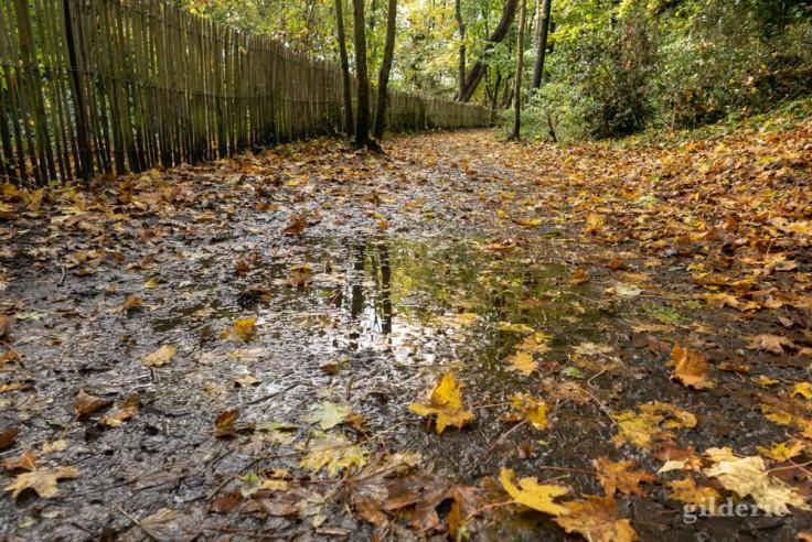 Balade autour du Fort de la Chartreuse en automne : flaque sur le santier (photo)