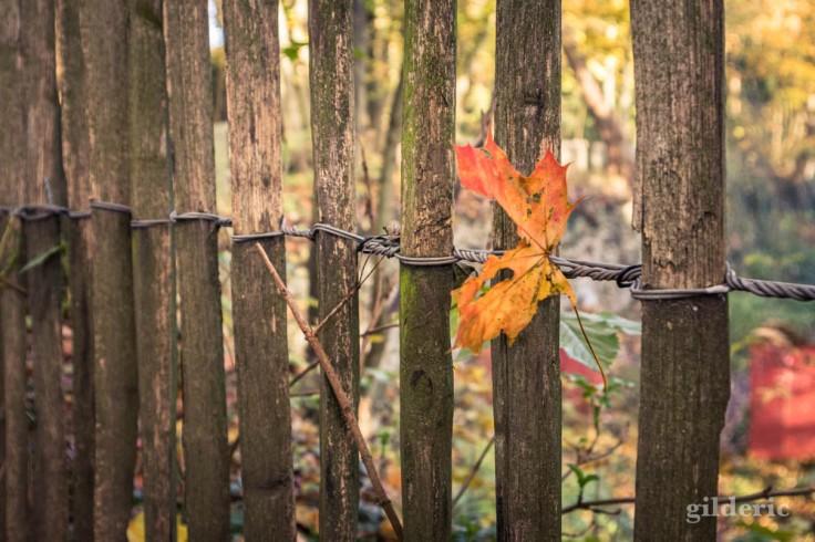 Balade autour du Fort de la Chartreuse en automne : la feuille sur la barrière (photo)