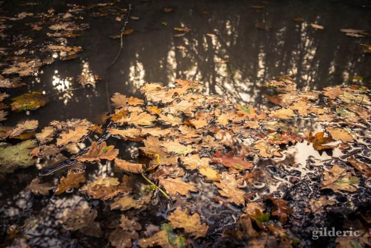 Balade autour du Fort de la Chartreuse en automne : feuilles dans la flaque d'eau (photo)