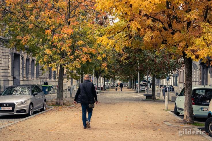 Un automne confiné à Liège : les arbres du boulevard Saucy (photo)