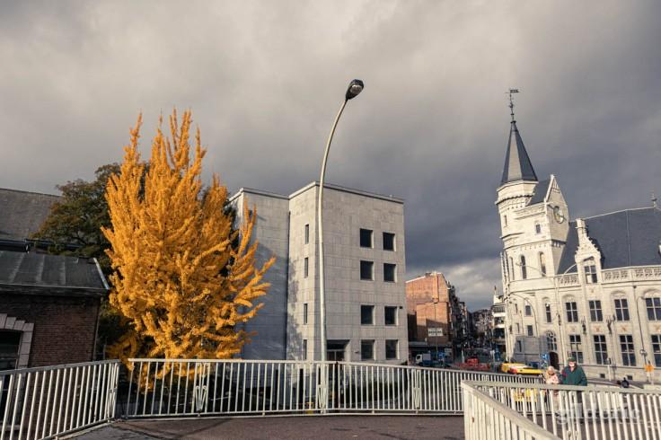 Automne à Liège : l'arbre jaune et la Grand Poste