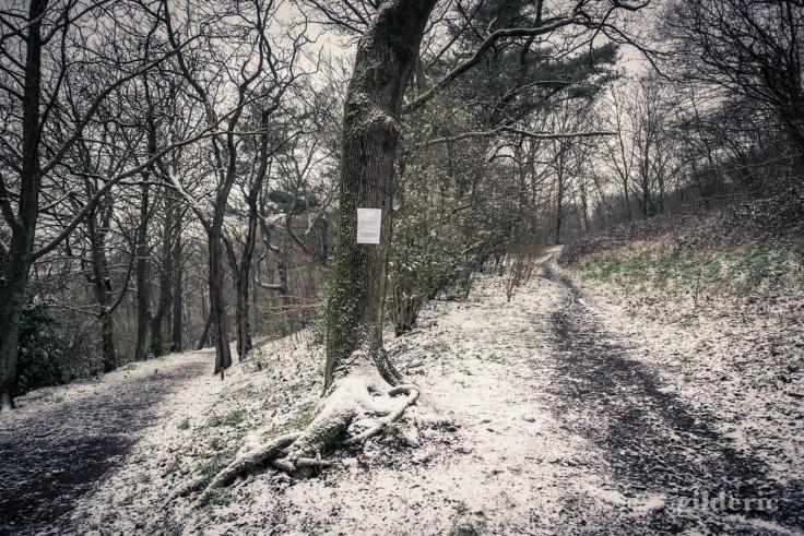 Bois de la Chartreuse sous la neige