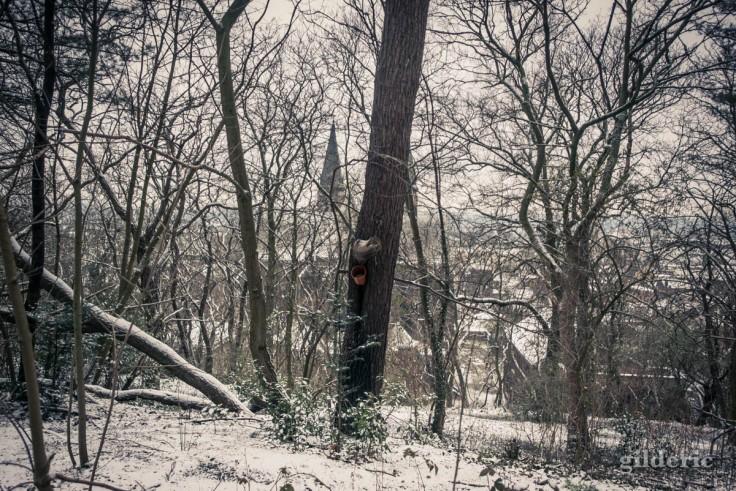Neige et silence dans les bois de la Chartreuse