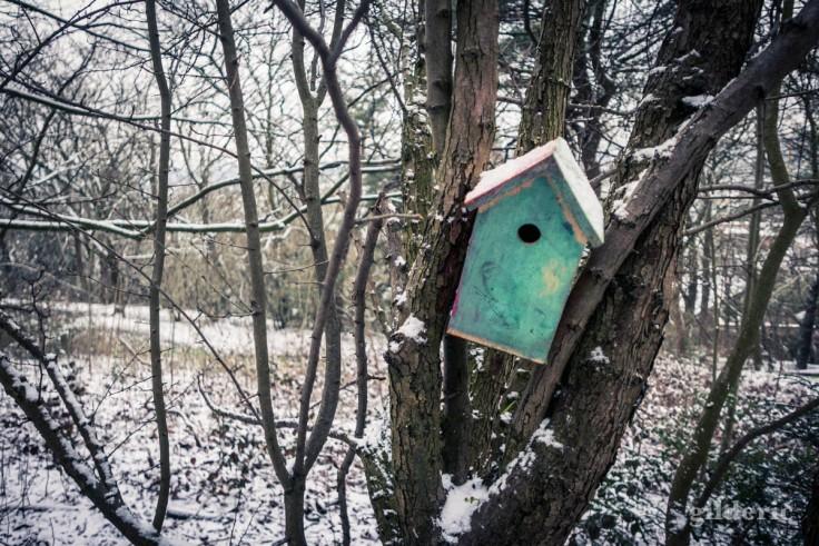 Nichoir pour oiseaux au parc de la Chartreuse