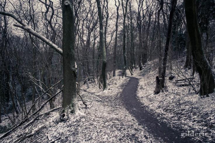 Un sentier sous la neige (parc de la Chartreuse)