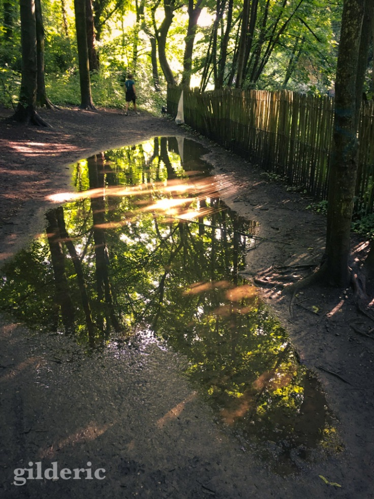 Reflets de lumière et d'arbres dans les flaques de la Chartreuse (Liège)
