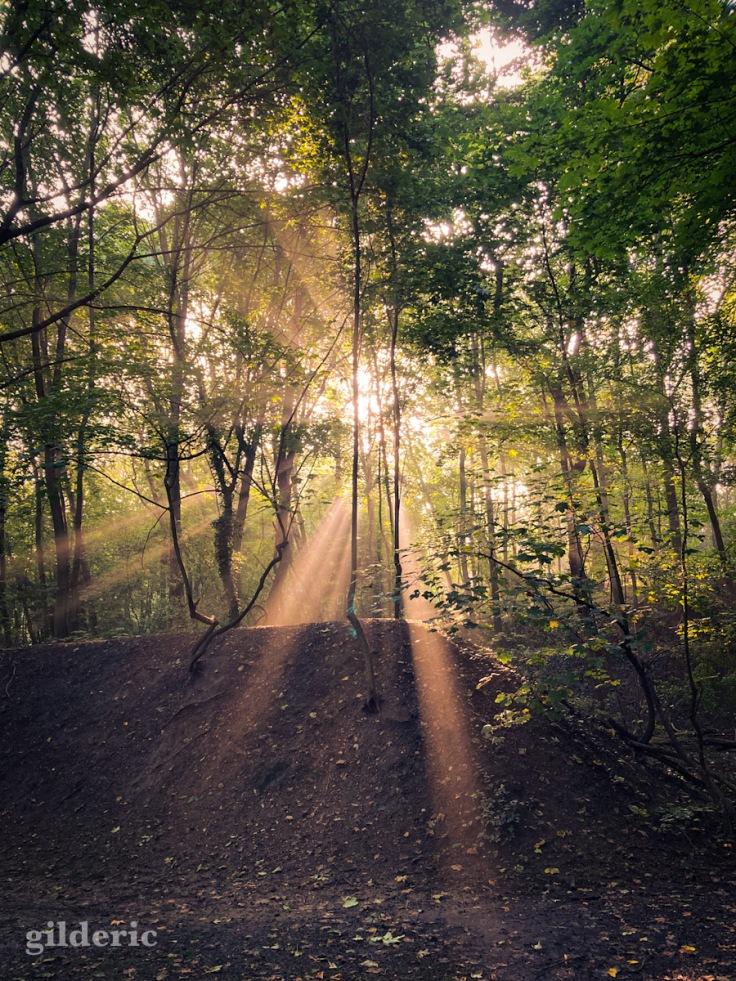 Un matin lumineux de fin d'été à la Chartreuse