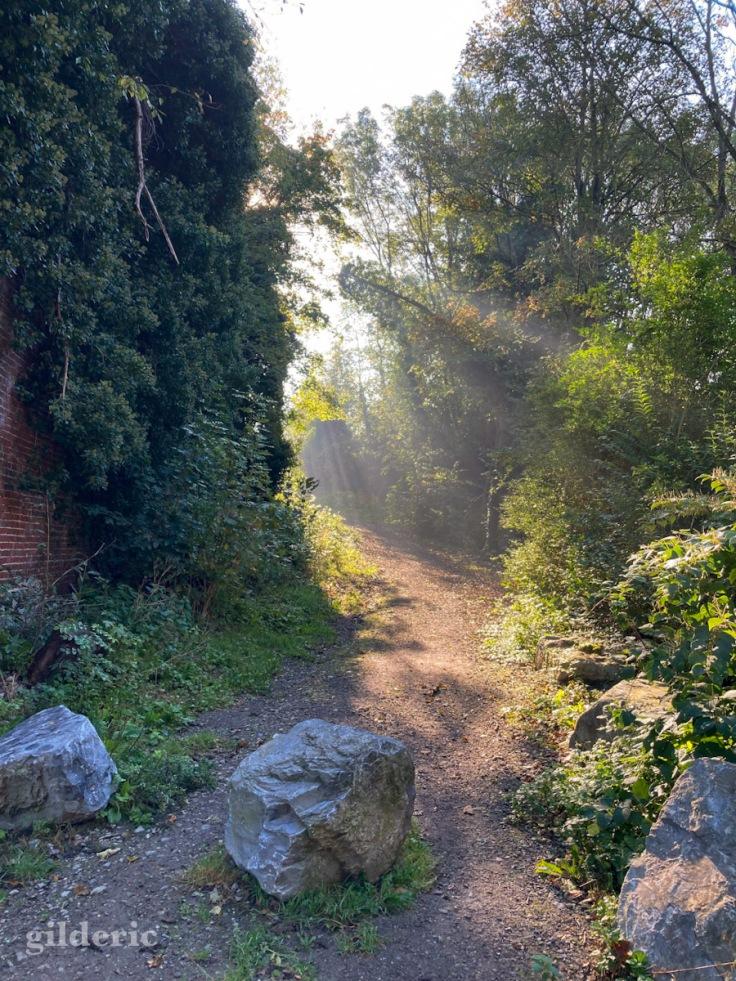 Les détours de lumière (automne au Fort de la Chartreuse)