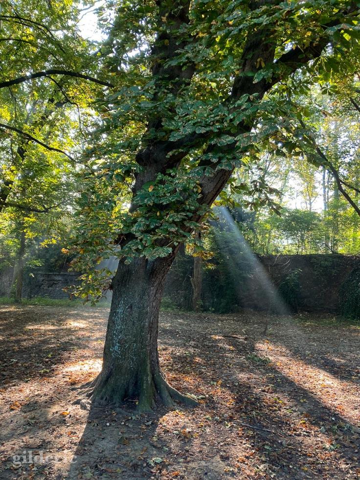 L'arbre baigné de lumière (Fort de la Chartreuse)